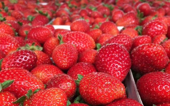 Carlsbad Farmers Market